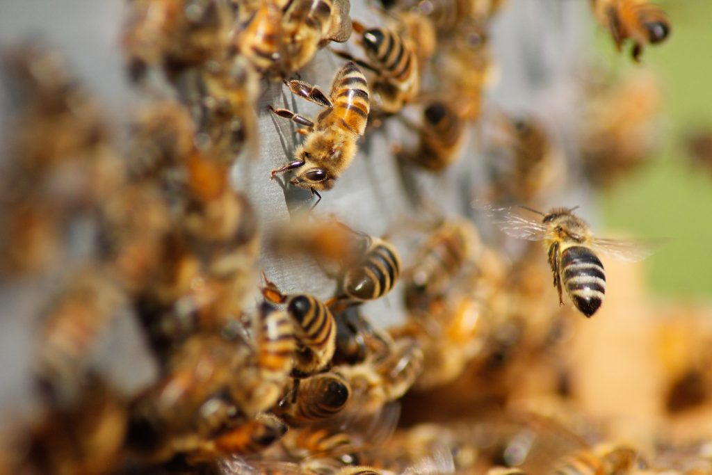 World Bee Day: the importance of bees for nature and humans